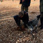 Demostración perros buscando trufas